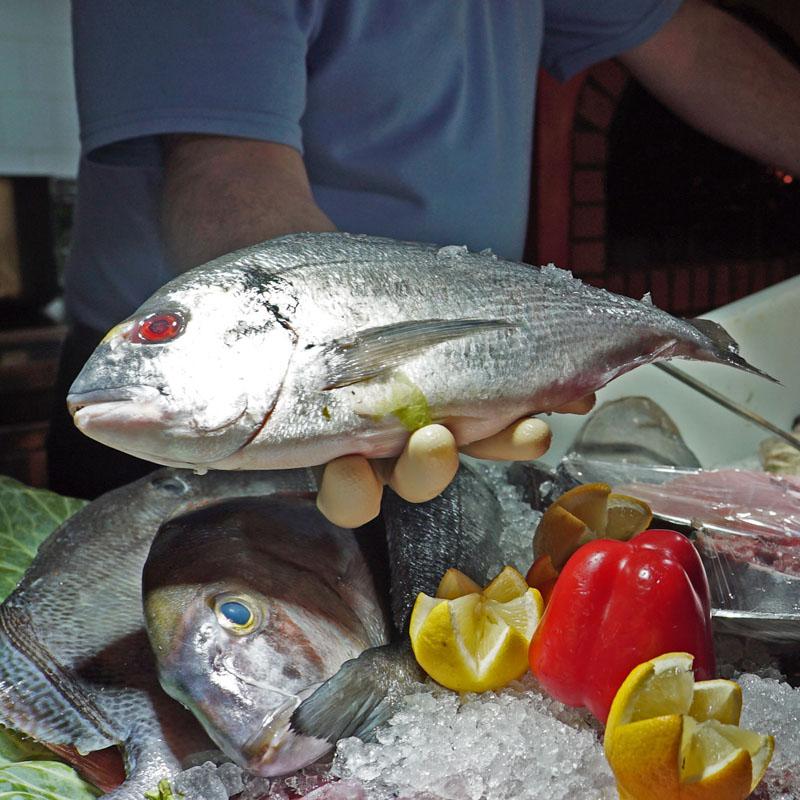 Dorda Fisch in der Hand